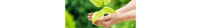 fase di vita di una startup: seed